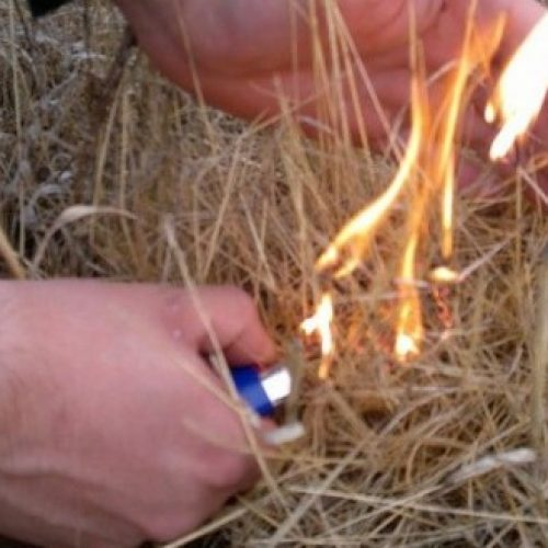 PJ deteve incendiário no concelho de Tondela