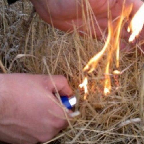 PJ deteve incendiário florestal em Penacova