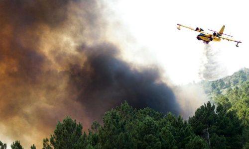 Incêndio na Pampilhosa da Serra destruiu 250 hectares de floresta