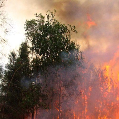 Cerca de 150 operacionais combatem chamas em Pampilhosa da Serra