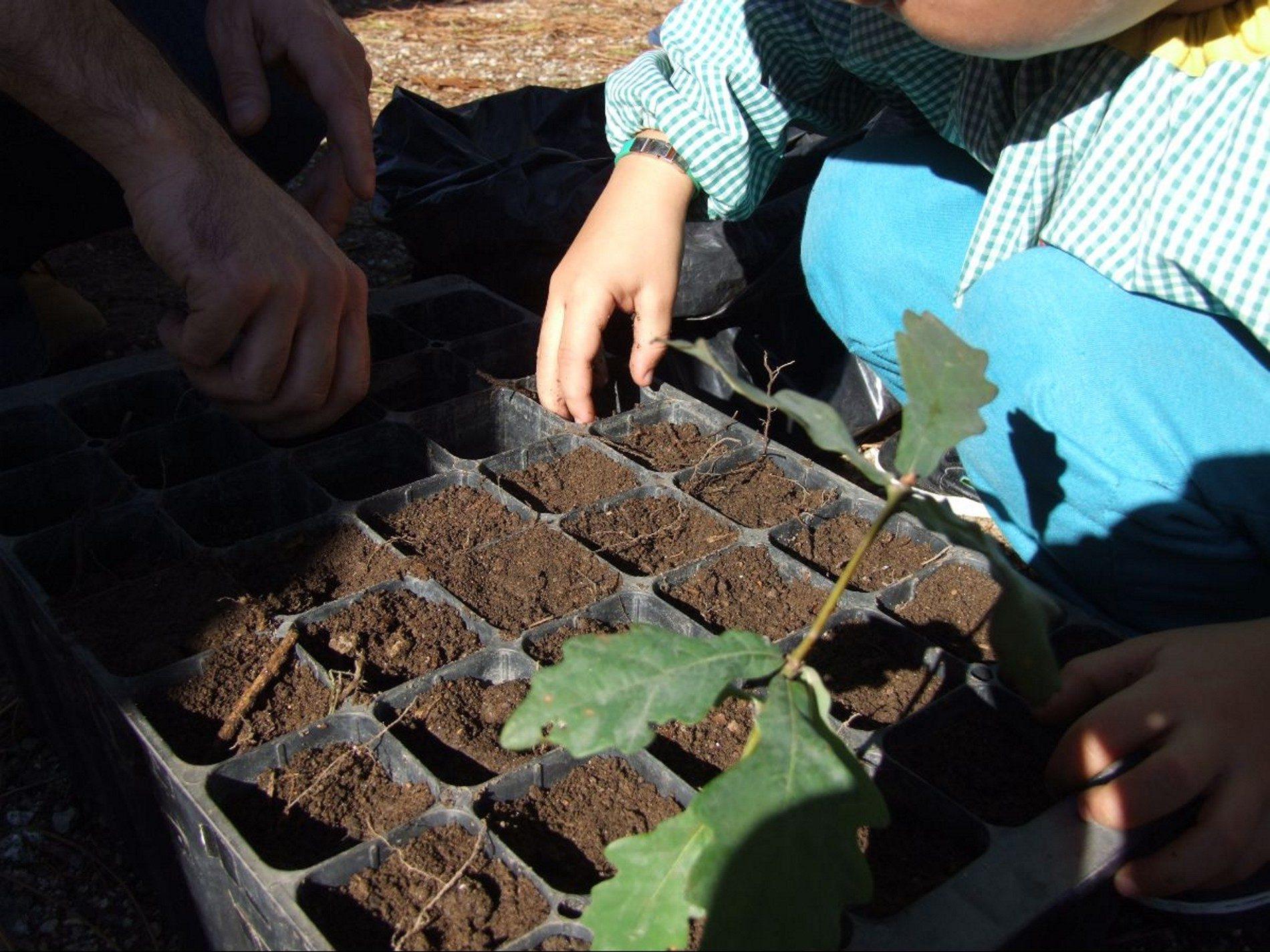 Projeto Reflorestar: Oliveira do Hospital já distribuiu 84 mil árvores à população