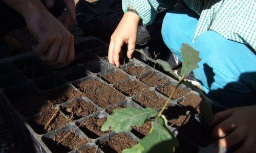 Seia vai plantar 5 mil medronheiros na Mata do Desterro