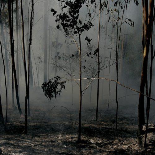 """Governo reconhece fogos como """"catástrofe natural"""""""