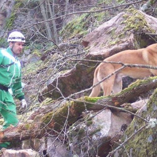 """Idosa desaparecida em Folgosinho foi encontrada numa """"mata a cerca de um quilómetro da sua residência"""""""