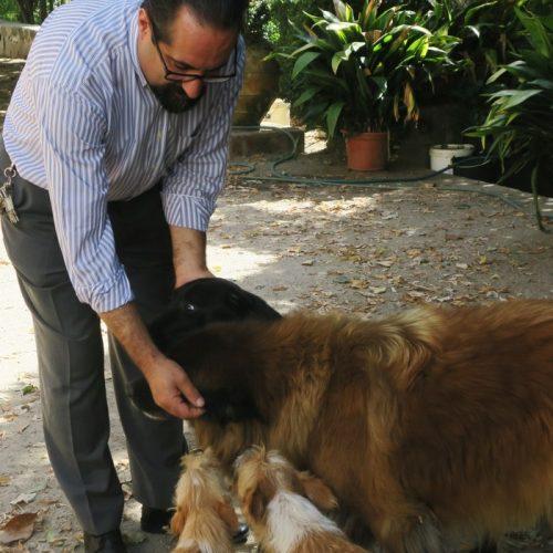 Paulo Marques tem mais de 150 animais a seu cargo. Já cuidou de muitos mais…
