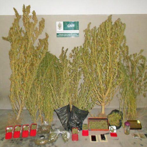 GNR deteve homem de 34 anos suspeito de tráfico de droga