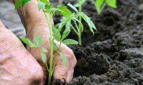 ADIBER com novos apoios para as explorações agrícolas