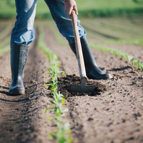 ADIBER com apoios para as explorações agrícolas até 17 de fevereiro