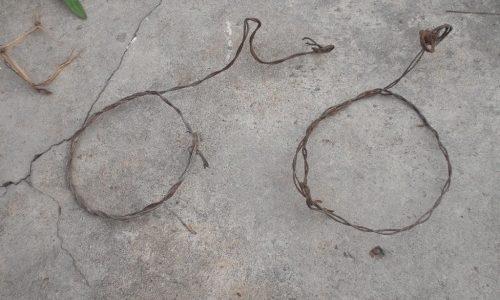 Detido por caça ilegal em Miranda do Corvo