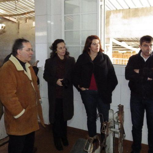 Ovinicultores queixam-se de excesso de burocracia e falta de valorização a grupo de trabalho do setor do leite