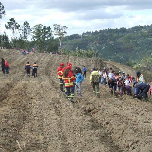 Ação de reflorestação e limpeza em Avô assinalou Dia da Floresta