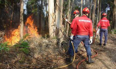 Mangualde: Homem identificado por incêndio florestal por negligência