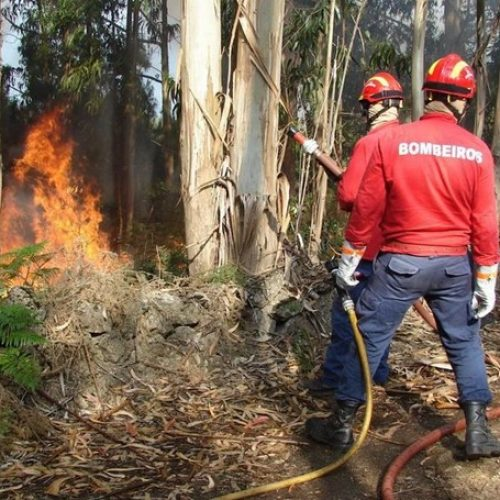 Onze meios aéreos combatem fogo na Figueira da Foz