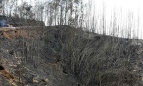 GNR regista 163 contraordenações por queimas e queimadas em dois meses