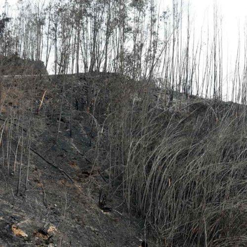 Identificados quatro suspeitos de incêndio em Viseu