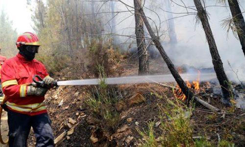 """Incêndios: Autarca de Arganil rejeita """"medidas em cima da tragédia"""""""