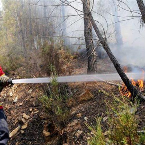 Quase 150 bombeiros combatem chamas em Mangualde