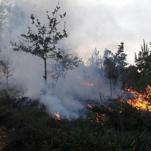 Oliveira do Hospital foi o concelho com mais pedidos para queimas e queimadas junto do ICNF