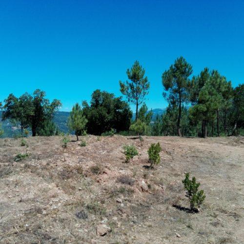 Estado investe 560 mil euros na recuperação da Mata da Margaraça