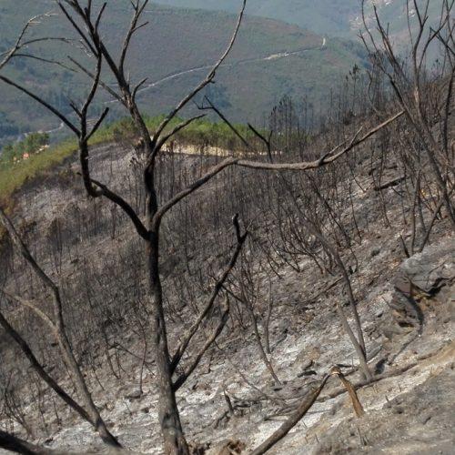 Incêndio que deflagrou no Monte do Colcurinho foi dominado a meio da manhã