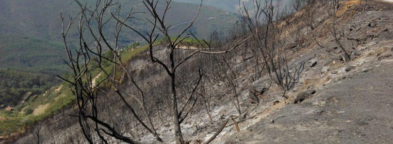 Fogo da Pampilhosa da Serra consumiu mais de 6.500 hectares de florestas
