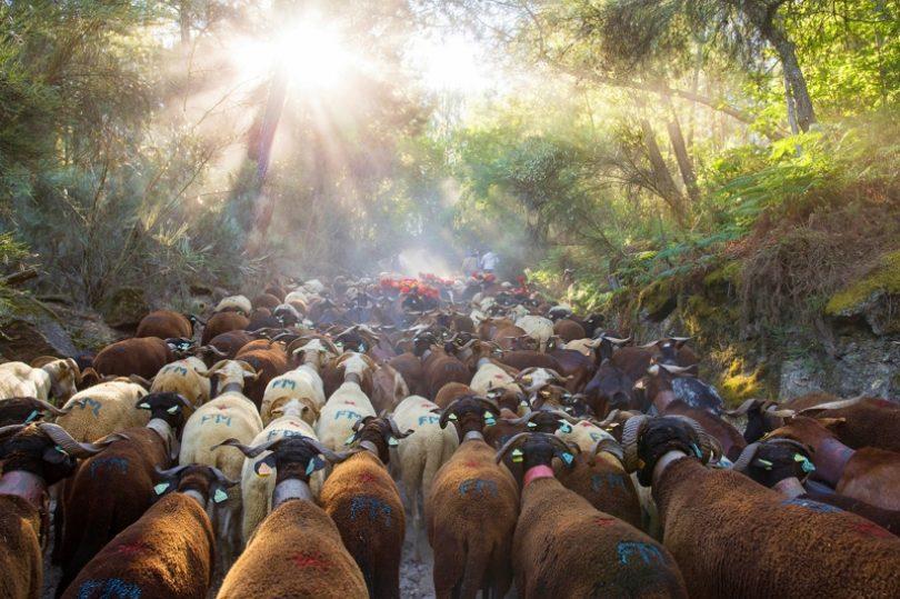 """""""Luz Divina"""" é a grande vencedora do concurso de fotografia do CISE"""