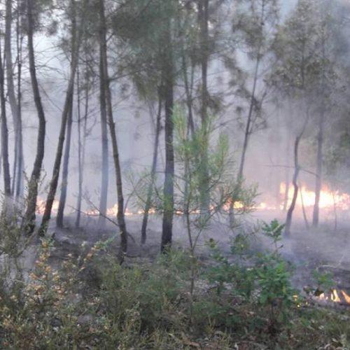 Seis corporações de bombeiros combateram fogo em Lourosa
