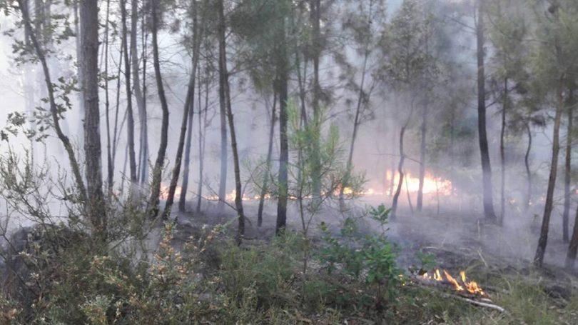 Governo admite dar mais tempo e dinheiro a autarcas para limpar a floresta