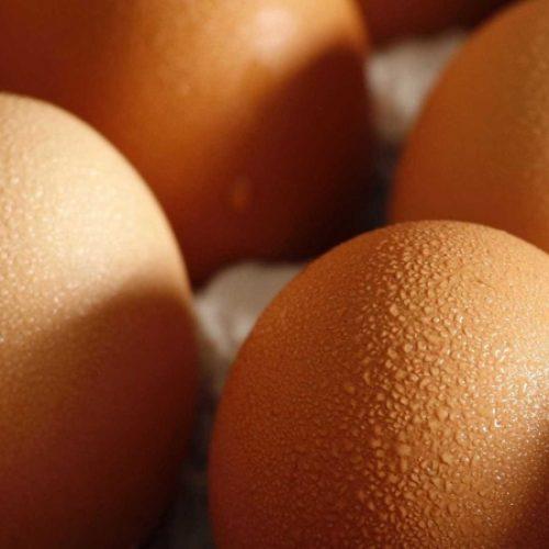 Governo garante que não há ovos contaminados à venda em Portugal