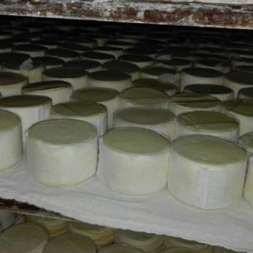 ASAE apreendeu seis toneladas de queijo com água oxigenada na zona Centro do país