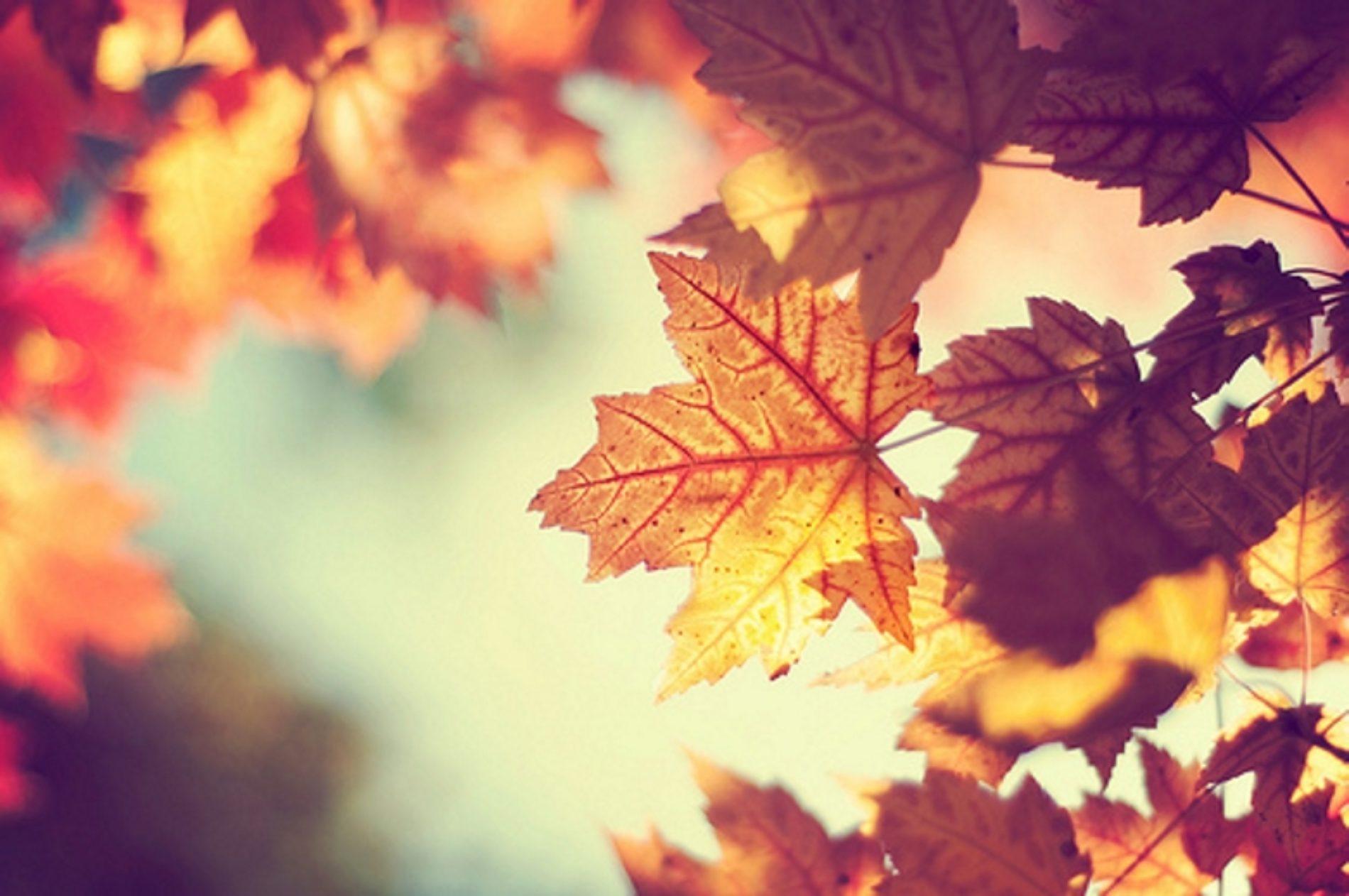 Outono começa hoje com temperaturas entre 20 e 27 graus e chuva