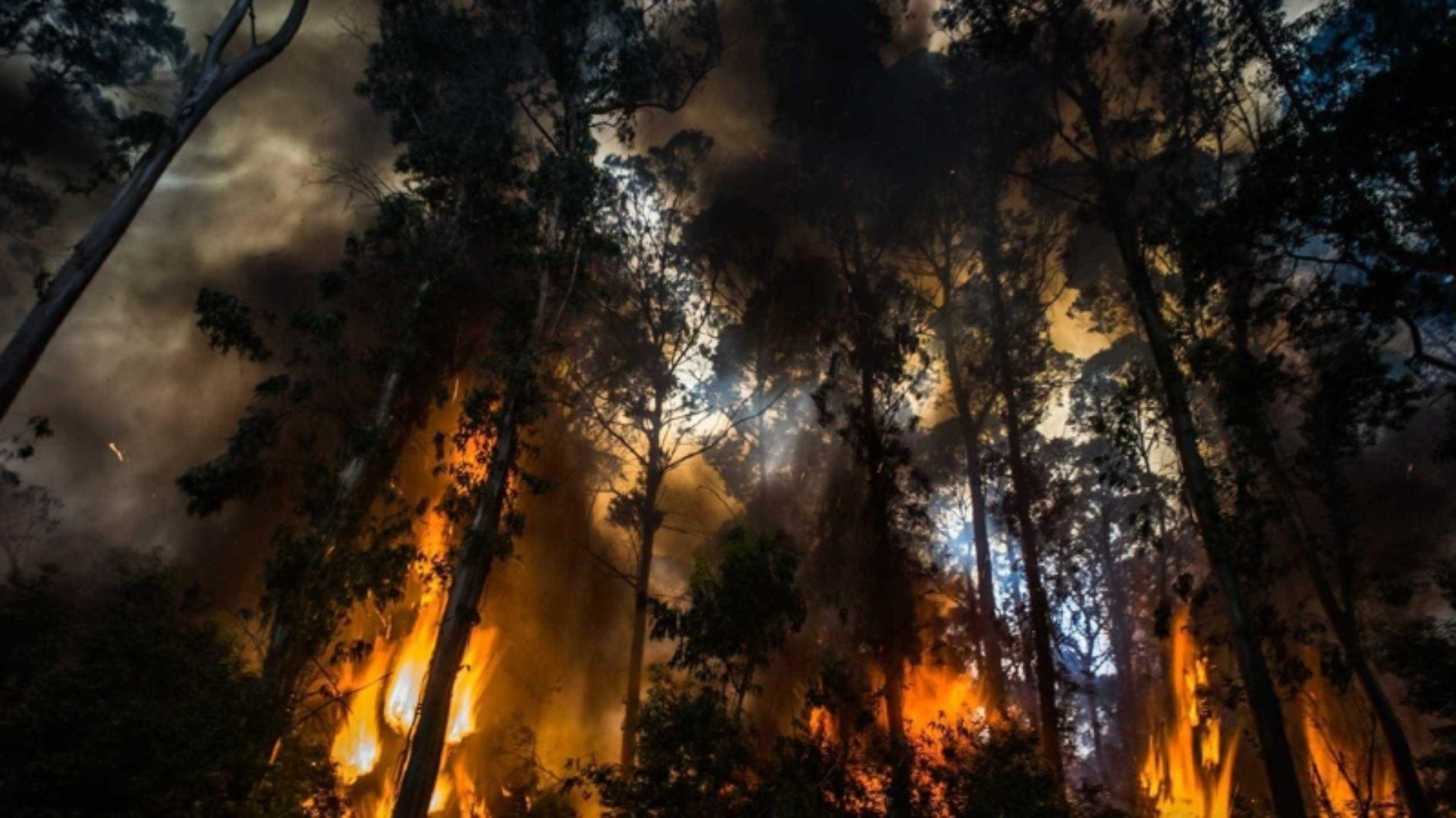 Incêndio em Pampilhosa da Serra é o que mais meios mobiliza
