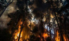 Beiras e Serra da Estrela instalam videovigilância para detetar incêndios