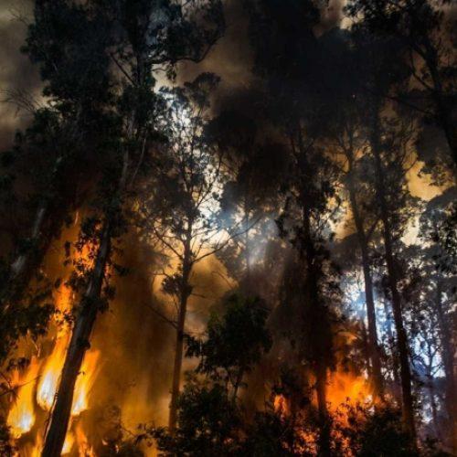 Guarda: Dominado incêndio que mobilizou mais de 200 bombeiros