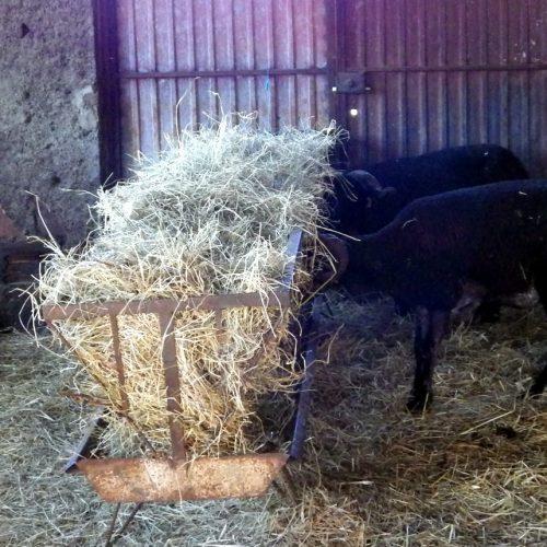 Produtores pecuários afetados pelos fogos isentos de pagar registo animal