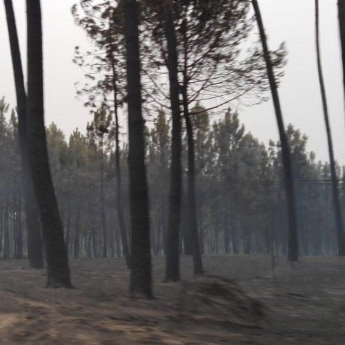 Centro de estudos de Coimbra pede informações a testemunhas dos incêndios de outubro
