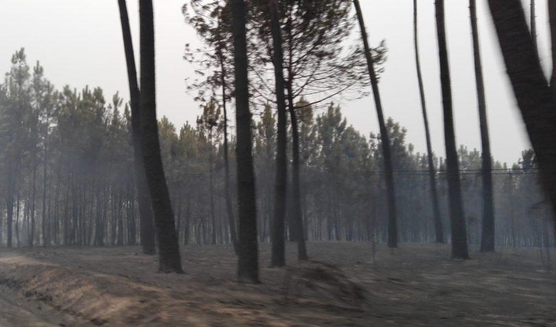 Incêndios: CNA diz que agricultura ficou mais fragilizada e floresta com mais riscos