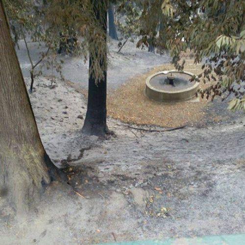 Aldeia das Dez sem condições para realizar Festa da Castanha após incêndio