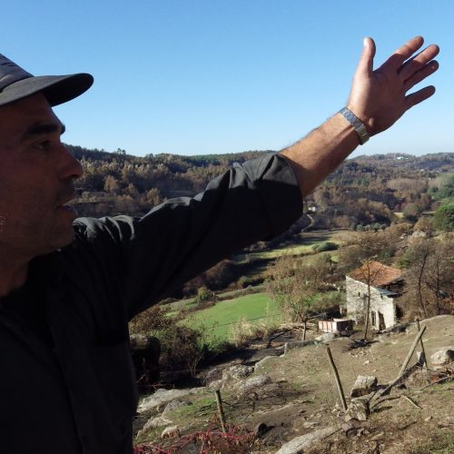 Produtor com mais ovelhas perdeu metade do efetivo e receia não ter condições para continuar a produzir Queijo Serra da Estrela
