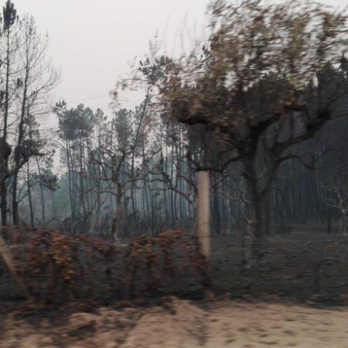 Gabinete florestal faz recomendações para proteção do solo contra erosão em Oliveira do Hospital