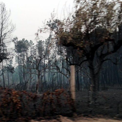 """Freguesia de Ervedal e Vila Franca da Beira aprova """"voto de protesto"""" pelas indefinições e atrasos nos apoios às vítimas dos incêndios"""