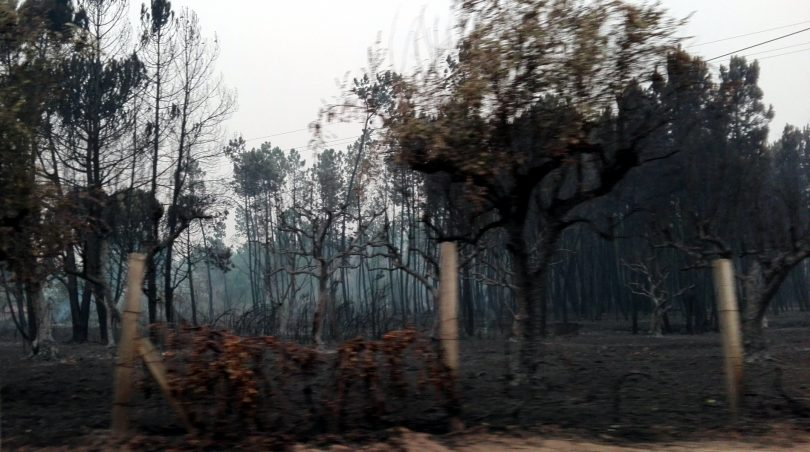 Incêndios: 13 mil agricultores começam hoje a receber indemnizações
