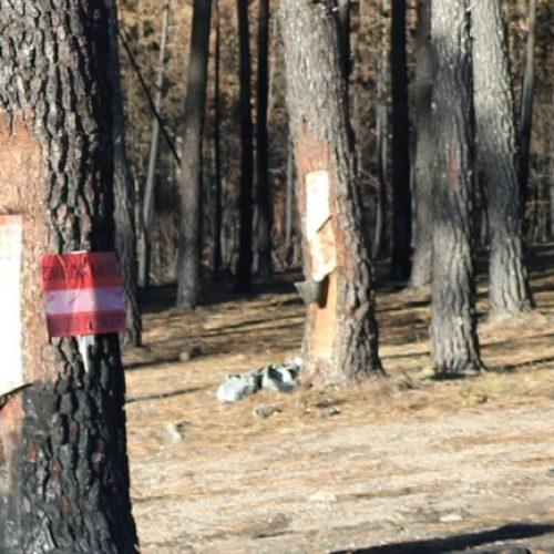 Governo continua a proibir a caça nas zonas afetadas pelos incêndios até 2019