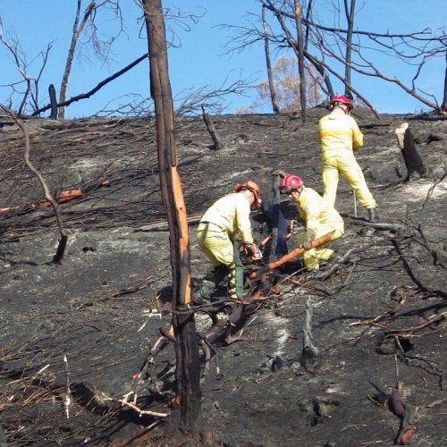 Oliveira do Hospital deu início à estabilização dos solos após incêndio