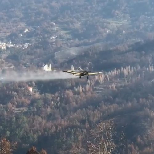 Avião lançou sementes em área ardida no concelho de Oliveira do Hospital