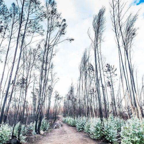 A reflorestação de Pedrógão Grande ainda está por arrancar