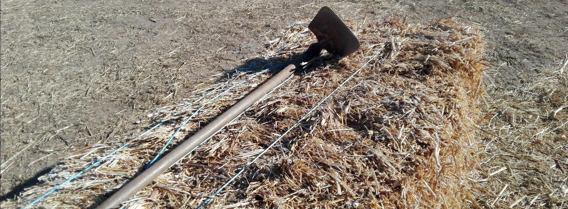 Incêndios: Um quinto dos agricultores afetados apresentou pedidos de pagamento. Outros admitem desistir