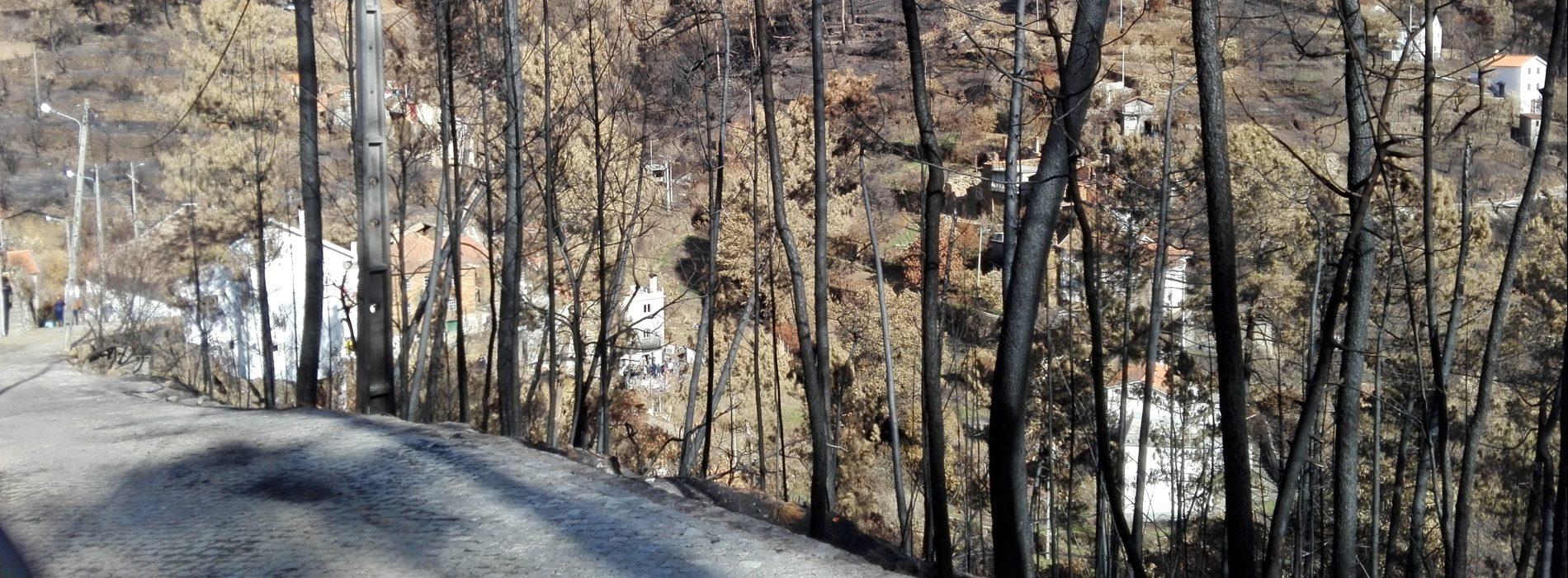 """Presidentes de Junta alertam para """"urgência"""" do corte de árvores ardidas nas bermas de estradas e caminhos"""