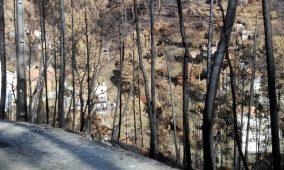 Oliveira do Hospital está fora do mapa das mais de mil freguesias com risco elevado de fogo