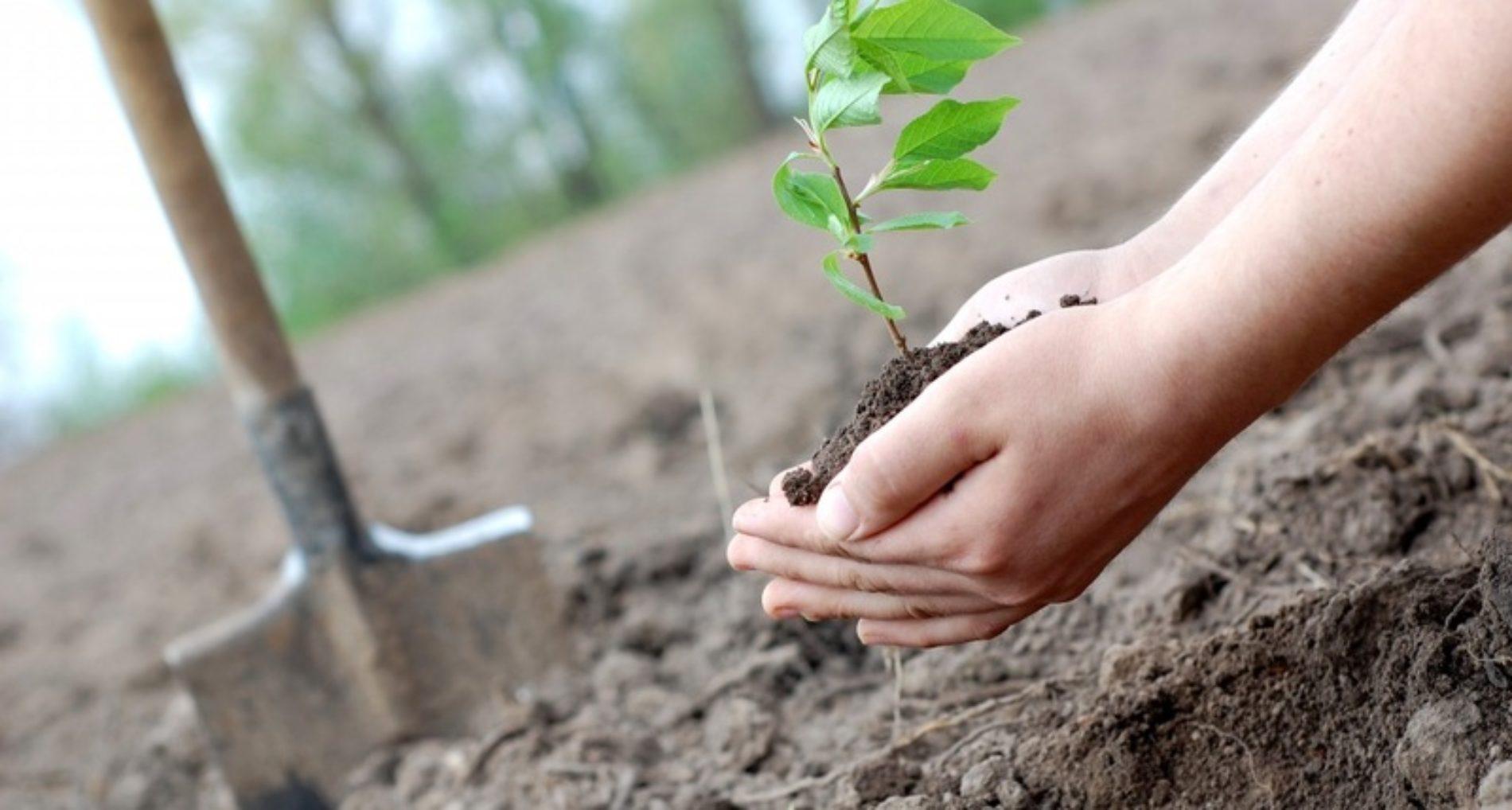 Celorico da Beira planta duas mil árvores junto do Parque Industrial
